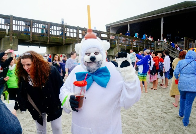 Polar Bear ready to take the plunge on Tybee Island.
